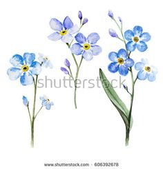 forget me nots are the Alaska state flower