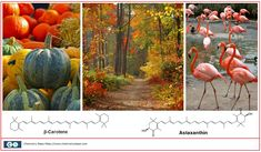Carotenes: From Vitamins to Colorful Leaves - Chemistry Steps Chemistry Lessons, Fruits And Vegetables, Orange Color, Vitamins, Pumpkin, Leaves, Colorful, Pumpkins, Fruits And Veggies