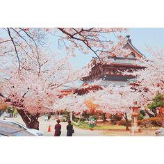 【yams0509】さんのInstagramをピンしています。 《여름인데 벚꽃보고 싶다.... #일본 #풍경 #풍경사진 #벚꽃 #여름 #봄 #桜 #夏…