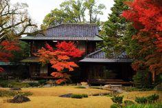 無鄰菴の母屋と目を引くような鮮やかな紅葉 Autumn Leaves, Colored Leaves, Japanese, House Styles, Kyoto, Garden, Home Decor, Beautiful, Nature