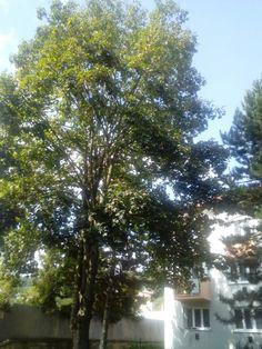 Jesen stromy