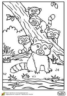 Illustration d'une maman raton laveur et ses petits au bord de l'eau, coloriage pour enfants
