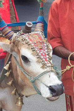 On this pin you see a decorated cow in South India. The cow is the most holy animal in India. Everywhere you go, you will see cows laying on the busy streets. There are several reasons why the cow is holy; 1) It gives a lot to people, think like manure, milk etc. And 2) the cow is connected with the gods, they ride on special cows.