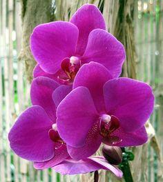 Storczyk Fot. Virginielenoir - pixabay.com