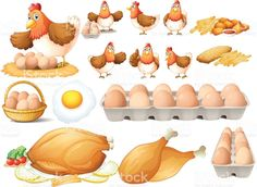 Chicken and different types of chicken products royalty-free stock vector art