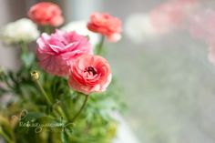 Pretty Little Things. Indoor plants flowers. Ranunculus. Katie Juszczak Photography.