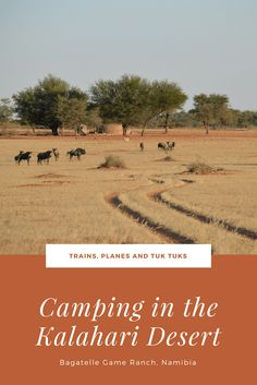 Ever dream of camping in one of the world's most epic deserts? Read what it's like to camp in the Kalahari Desert, Namibia, Africa Kenya Travel, Africa Travel, Adventure Activities, Travel Activities, Africa Destinations, Travel Destinations, Honeymoon Spots, Beaches In The World, Travel Guides