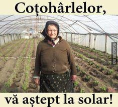 Vă aștept la solar Funny Memes, Jokes, Haha, Memories, Humor, Life, Solar, Chistes, Cheer