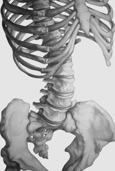 Skeletal Torso by Katy Wiedemann, via Behance