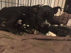Angel and her 7 miracle babies. First day of life. Safe and sound. God bless the ones that aren't. All My Relations Wado