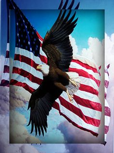 USA flag and eagle Patriotic Pictures, Eagle Pictures, I Love America, God Bless America, American Pride, American Flag, American Freedom, Native American, Independance Day