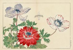 Tanigami Konan Seiyo Soka Zofu Woodblock Print from 1917. #japanese #woodblock #flowers