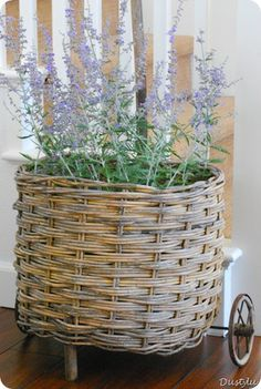 Russian sage in a basket - Looks a bit like lavender from a distance, but is easier to grow and maintain. Home Decor Baskets, Basket Decoration, French Baskets, Basket Crafts, Market Baskets, Rattan Basket, Wooden Crates, Garden Structures, Flower Basket