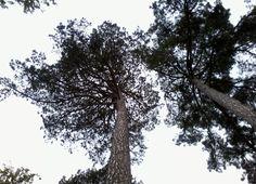 Trees by HONGBO WANG on 500px