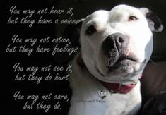 Gallery For Pitbull Dog Quotes Positive I Love Dogs, Puppy Love, Dog Shaming, Dog Wallpaper, Wallpaper Quotes, Dog Rules, Pit Bull Love, Animal Quotes, Animal Pics