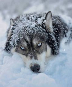 The eyes and the snow beautiful but his getting cold.