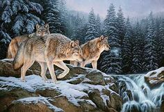 SPIRIT OF THE WILD-WOLF by Rosemary Millette