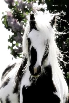 We just love horses! Don't you?  All shapes, colours & moods!  #unique #blackandwhite #horse #peace #love #live #ride