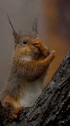 I'm thinking, I'm thinking. What did I do with that nut?