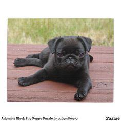 love these black little pugs! they're super cute pugs Cute Pug Puppies, Black Pug Puppies, Black Puppy, Cute Pugs, Dogs And Puppies, Black Dogs, Black Dog Names, Doggies, Pug Kawaii