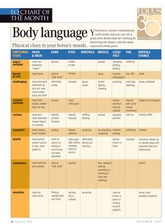 Use this body language chart to understand your horse's mood through his physical clues.