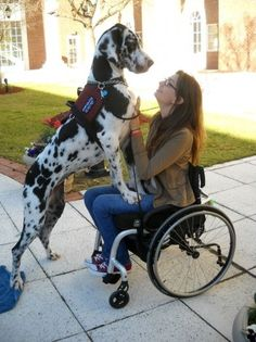 A week after her former service dog passed away from bone cancer, Jade said that life without a Dane was not an option. Click to read Jade's story.