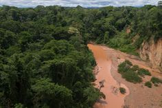 Bolivia's Madidi National Park, which is part of the Amazon basin, is one of the most biodiverse places on the planet.