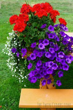 Easy flower garden ideas and watering schedule