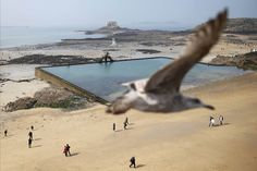 A seagull flies above the beach as visitors make their way across the wet sand during a record low tide in Saint Malo Digital Photography, Amazing Photography, Photography Tips, Great Hobbies, Most Powerful, Digital Slr, Funny Photos, Around The Worlds, Ocean