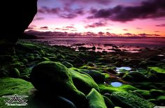 Mossy Rock Garden :: Surf photography, wave art, empty waves and prints by Aaron Goulding