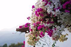 one of my favorite parts of Mexico! Mediterranean Style Homes, Flower Bomb, Summer Design, Puerto Vallarta, Tropical Garden, Beautiful World, Outdoor Gardens, Garden Design, Floral Wreath