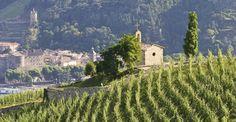 Superb vineyards in Rhone Valley