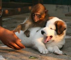 Please sir, don't touch my puppy