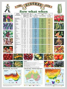 Potager Garden Start To Grow: Gardening Planting Guides for Australia Vegetable Planting Guide, Planting Vegetables, Organic Vegetables, Growing Vegetables, Potager Garden, Veg Garden, Edible Garden, Garden Plants, Flowers Garden
