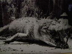 Giant Croc 1914