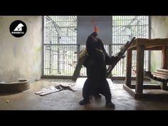 Baby sun bear cubs meet for the first time | Animals Asia WATCH!   https://www.youtube.com/watch?v=EpaafkWLnsM&feature=share