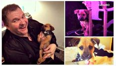 Many abandoned dogs are rescued everyday and when rock star singer Meatloaf was on tour, the crew one night noticed someone left a puppy behind a dumpster. They decided to rescue the puppy and proceeded to feed, cuddle and take …