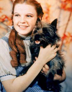 Throwback Thursday: Sizin de Toto gibi bir köpeğiniz varsa, Canada Pooch ona çok yakışacak… #throwbackthursday #tbt   http://www.shopigo.com/markalar/canada-pooch