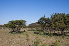 This property is ideal for horses and cattle, with well established Impala and Blesbok breeding groups. Well positioned, close to Port Alfred with all. Alexandria, Farms, Cape, Country Roads, Horses, Plants, Haciendas, Mantle, Homesteads