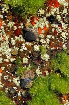 Photo of a tide pool on Star Island taken by Sharon Seaward