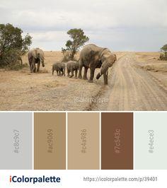 African Colors, Indian Colours, Elephant Colour, Color Schemes Colour Palettes, Theme Color, Indian Elephant, Color Palate, African Safari, Color Inspiration