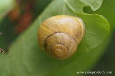 Protecting your Plants from Slugs and Snails - Pumpkin Beth Garden Pests, Edible Garden, Snails, Types Of Food, Pest Control, Pumpkin, Homesteading, Plants, Gardening