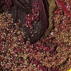 Everwilde Farms  2000 Red Garnet Amaranth Herb Seeds  Gold Vault Jumbo Seed Packet *** Want additional info? Click on the image.