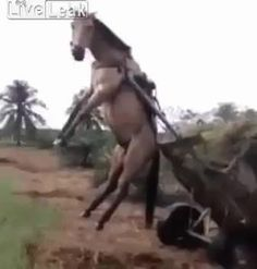 Confused horse left hanging in the air