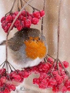 Птичка - анимация на телефон №1352492