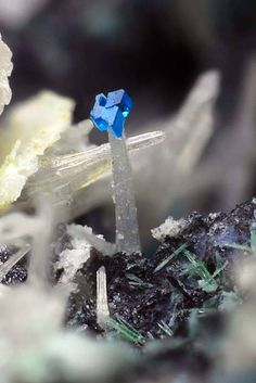 Langite, Cérusite. Monte Trisa Mines, Mercanti Valley, Torrebelvicino, Vicenza Province, Veneto, Italy Taille=0.52 mm Collection Paolo Chiereghin / Photo Matteo Chinellato 0.52 mm Cerussite crystal with blue Langite crystal on the termination.