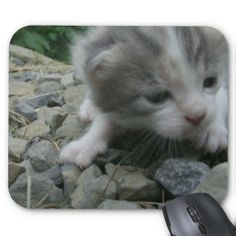 Adventure Kitten Mousepad!  #clever #cat #mouse #pad #mousepad #zazzle #store #kitten #office #gift http://www.zazzle.com/conquestkitty*