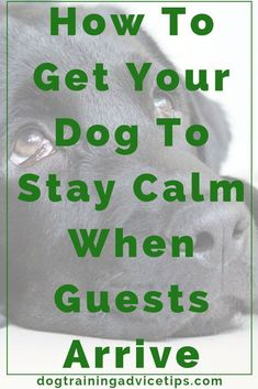 How to Get Your Dog to Stay Calm When Guests Arrive - Dog Training Advice Tips Training Your Puppy, Brain Training, Dog Training Tips, Potty Training, Agility Training, Training Schedule, Training Classes, Dressage, Labrador Retriever