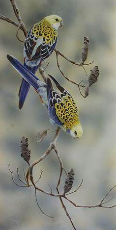 Pale Headed Rosellas Bird Art by artist Peta Boyce