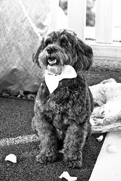 Dressed to impress in his little bow tie. Image courtesy of GM Photographics.
